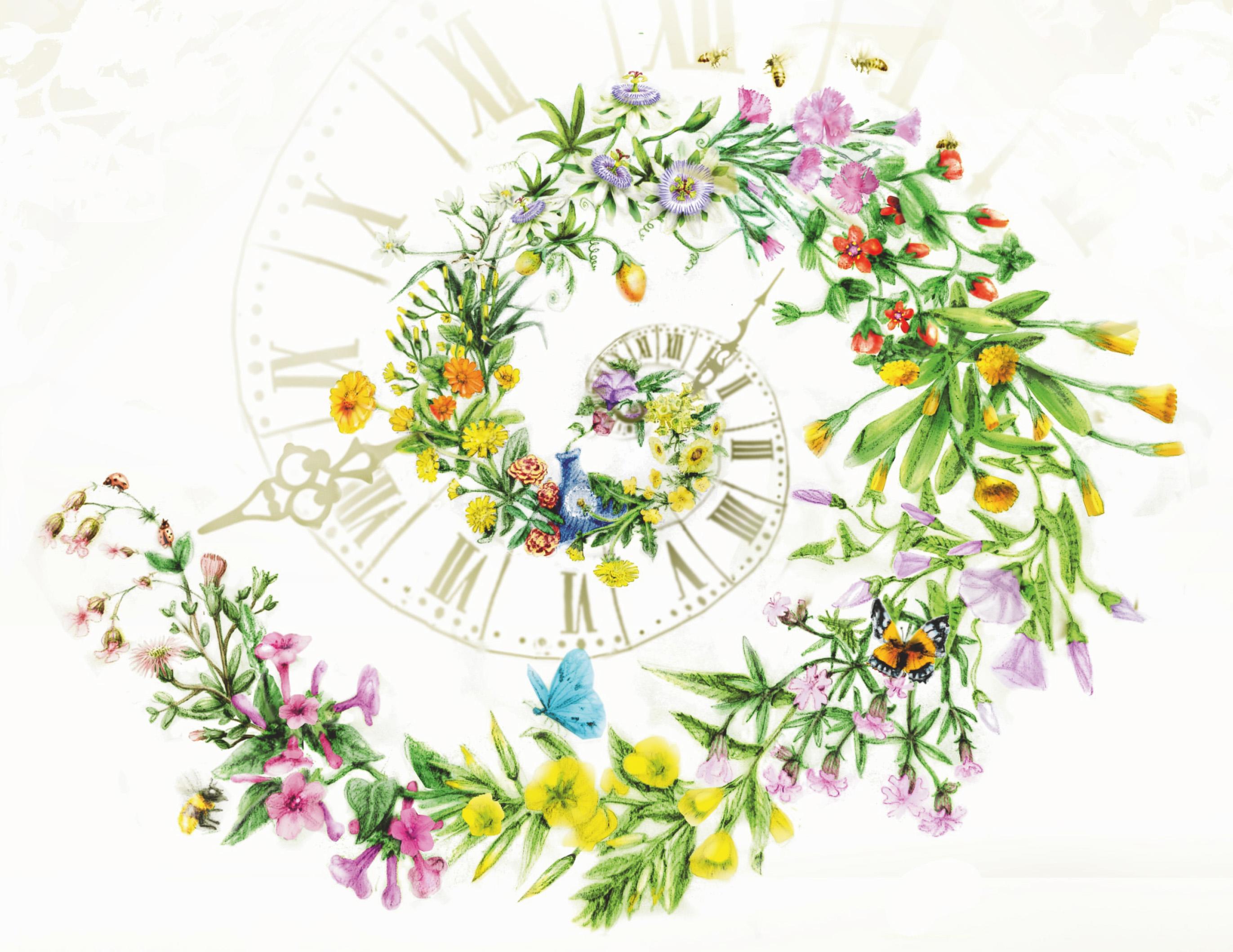 horloge-florale-de-linne